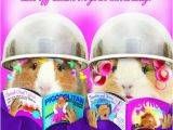 Hairdresser Birthday Card Funny Guinea Pig Birthday Card Let Off Steam Hairdressers