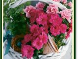 Happy Belated Birthday Flowers 19 Best Belated Birthday Wishes Images On Pinterest