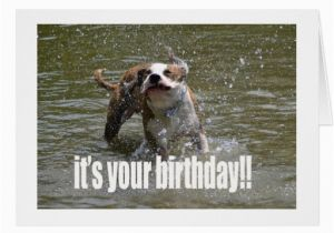 Happy Birthday Cards Dog Lovers Happy Birthday Dog Lover Card Greeting Card Zazzle