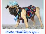 Happy Birthday Cards Dog Lovers Happy Birthday Muck Happy Birthday Section Noname Zone