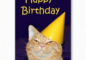 Happy Birthday Cards With Cats 17 Best Images About Cat On Pinterest