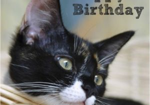 Happy Birthday Cards with Cats Cat In Basket Happy Birthday Card Rspca Animalternative