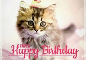 Happy Birthday Cards With Cats Cat Memes Funny