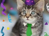 Happy Birthday Cards with Cats Dog and Cat Cards Happy Birthday Cards Pack Of Four