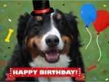 Happy Birthday Cards with Dogs Dog and Cat Cards Dog Birthday Card Card From Dog Pet
