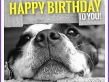 Happy Birthday Cards with Dogs Happy Birthday Memes with Funny Cats Dogs and Cute