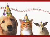 Happy Birthday Cards with Dogs Happy Birthday Quotes for Dogs Quotesgram