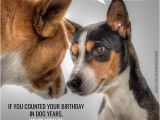 Happy Birthday Cards with Dogs Huge List Of Funny Birthday Messages Wishes Cracking Jokes