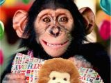 Happy Birthday Cards with Monkeys Cute Chimp Happy Birthday Greeting Card Cards Love Kates