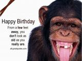 Happy Birthday Cards with Monkeys From A Few Feet Away You Don 39 T Look as Old
