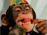 Happy Birthday Cards with Monkeys Happy Birthday to the Monkey In My Life Paris Let 39 S