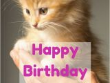 Happy Birthday Cat Quotes 25 Best Ideas About Cute Birthday Wishes On Pinterest