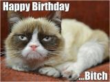 Happy Birthday Cat Quotes 56 Best Grumpy Cat Birthday Images On Pinterest Grumpy