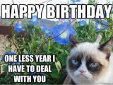 Happy Birthday Cat Quotes 58 Grumpy Cat Birthday Wishes