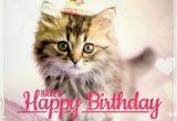 Happy Birthday Cat Quotes Best Happy Birthday Cat Meme