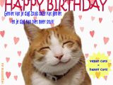 Happy Birthday Cat Quotes Happy Birthday Hairless Cat Quotes Litle Pups