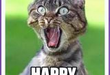 Happy Birthday Cat Quotes Happy Birthday Memes with Funny Cats Dogs and Cute Animals