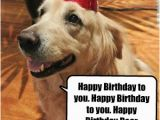 Happy Birthday for Dogs Quotes Dog Funny Birthday Quotes Quotesgram
