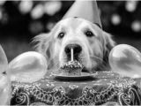 Happy Birthday for Dogs Quotes Happy Birthday Quotes for Dogs Quotesgram