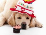 Happy Birthday for Dogs Quotes the 45 Birthday Wishes for Dogs Wishesgreeting