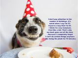 Happy Birthday for Dogs Quotes topic Birthday Quotes Wishes and Happy Birthday Images Quotes