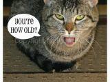 Happy Birthday From the Cat Card Molly Mcb Company