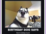 Happy Birthday Meme with Dogs Happy Birthday Memes with Funny Cats Dogs and Cute