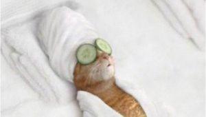 Happy Birthday Memes Cute 20 Adorbs Happy Birthday Cat Memes Sayingimages Com