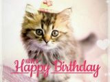 Happy Birthday Memes Cute 25 Best Ideas About Happy Birthday Cats On Pinterest