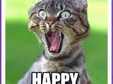Happy Birthday Memes Cute Best 25 Cat Happy Birthday Meme Ideas On Pinterest Cat