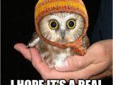 Happy Birthday Memes Cute Best 25 Cute Birthday Meme Ideas On Pinterest