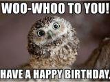 Happy Birthday Memes Cute Owl Birthday Memes Wishesgreeting