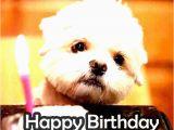 Happy Birthday Memes Cute the Birthday Thread Bioware social Network Fan forums