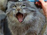 Happy Birthday Memes with Cats 20 Funny Happy Birthday Memes Sayingimages Com
