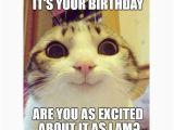 Happy Birthday Memes with Cats 45 Cat Birthday Memes Wishesgreeting