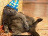 Happy Birthday Memes with Cats Best 25 Cat Happy Birthday Meme Ideas On Pinterest