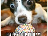 Happy Birthday to You Funny Quotes Funny Birthday Wishes for Friends and Ideas for Maximum