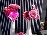 Hot Pink and Black Birthday Decorations Hot Pink and Black Birthday Party Ideas Photo 5 Of 7