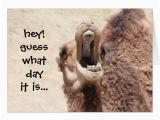 Hump Day Birthday Card Funny Camel Hump Day Birthday Card Zazzle Com