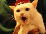 It S My Cat S Birthday Meme 17 Best Images About Ermahgerd Cat On Pinterest Cats