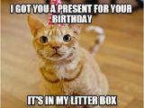 It S My Cat S Birthday Meme 45 Cat Birthday Memes Wishesgreeting