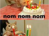 It S My Cat S Birthday Meme Cats Birthday Parties Damn Cool Pictures