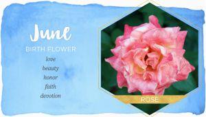 June Birthday Flowers June Birth Flower Rose Ftd Com