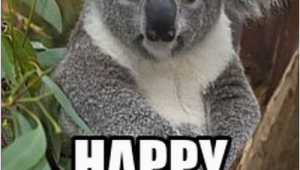 Koala Birthday Meme Happy Birthday Koala