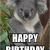 Koala Birthday Meme Happy Birthday Koala