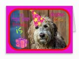 Labradoodle Birthday Card 352 Best Images About Pooches and Purrs Pet Store Zazzle