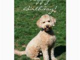 Labradoodle Birthday Card Happy Birthday Mini Goldendoodle Greeting Card Zazzle