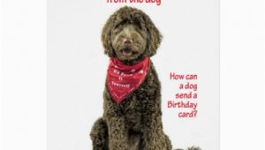Labradoodle Birthday Card Labradoodle Birthday Card Zazzle