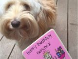 Labradoodle Birthday Card Peanut butter Banana Pupcakes Cupcakes for Dogs We are
