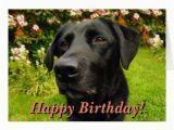 Labrador Birthday Cards Black Labrador Birthday Card Zazzle